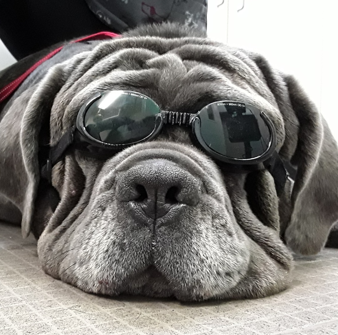 Wrinkles and Doggles